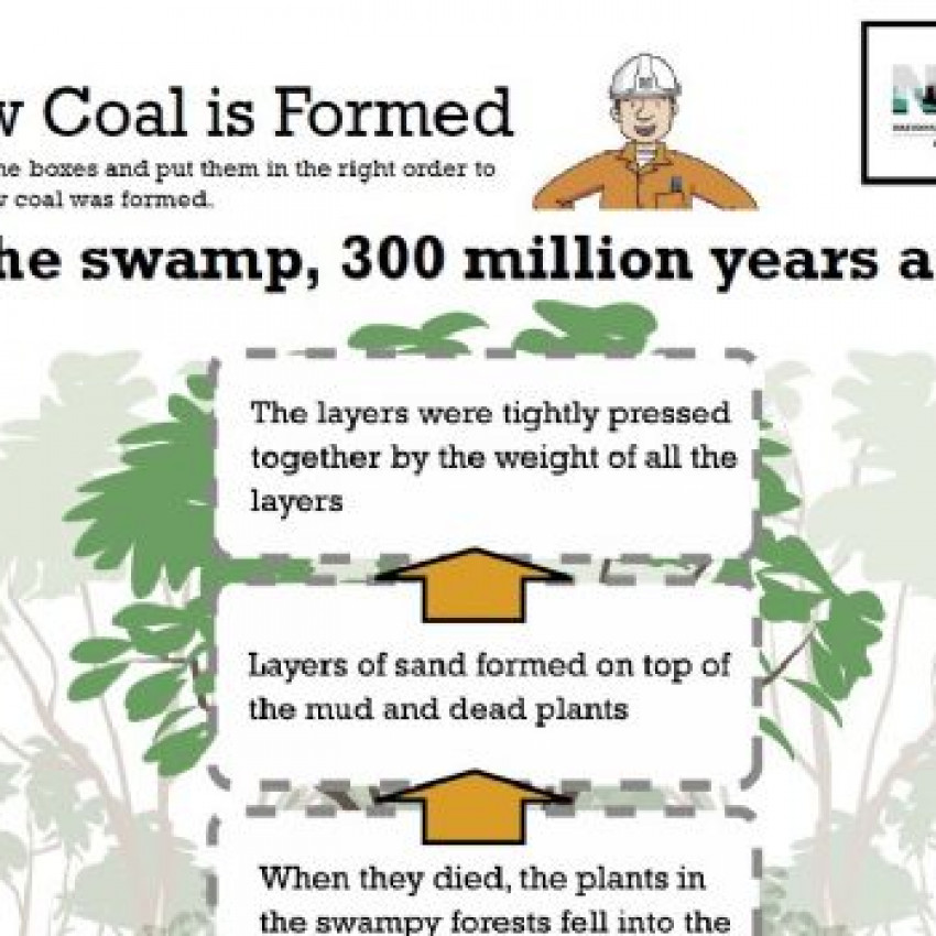 how coal is formed diagram