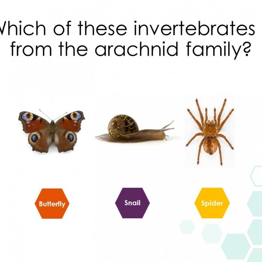 Minibeasts Interactive Powerpoint Quiz